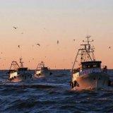 Scatta il fermo biologico, stop a pesce fresco in Adriatico