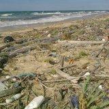 Bosco-Isola, il progetto di pulizia della spiaggia