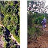 Bosco Isola, Forestali sequestrano terreni