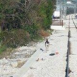 **************  Bambi a passeggio nella stazione di San Nicandro