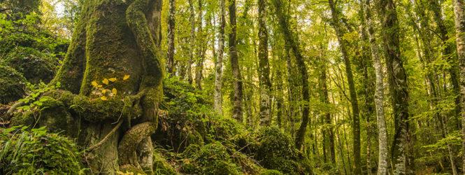 Foresta Umbra, si perdono mentre cercano un lago inesistente: ritrovati in 4