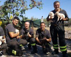 PESCHICI – 9 cuccioli intrappolati in un canale di scolo, salvati dai pompieri