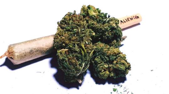 VIESTANO Beccato con 400 dosi di Marijuana , arrestato per spaccio (e furto di energia elettrica)