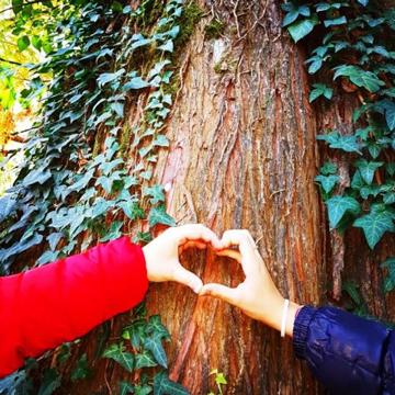 Trenta alberi per la vita. Il 21 novembre cerimonia di piantumazione a Monte Sant'Angelo